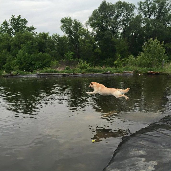 Abby Jumping!